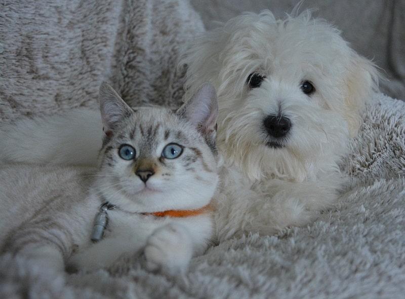 Κτηνιατρικά Προϊόντα